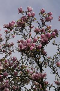 20130827_1021_10202 magnolia