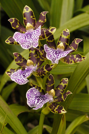 20140604_0933_6727 orchid