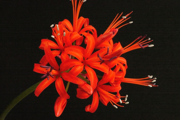 20140323_0937_6310 lily