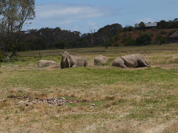20131227_1309_1272 Werribee Zoo