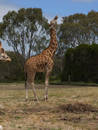 20131227_1308_1265 Werribee Zoo