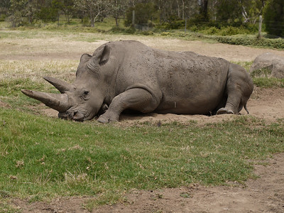 201312227_1311_1279 Werribee Zoo