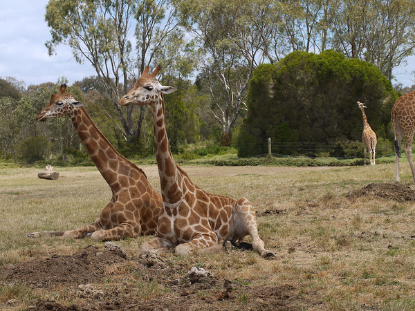 20131227_1308_1258 Werribee Zoo