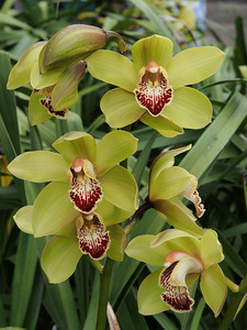 20130817_1457_0362 orchid